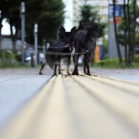 road_s