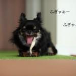 ichi_25246.jpg