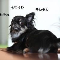 ichi_25296.jpg