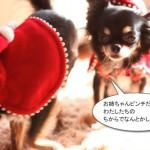 ichi_25683.jpg