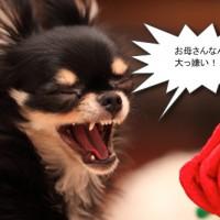 ichi_25985.jpg