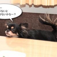 ichi_26004.jpg