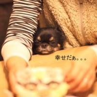 ichi_26170.jpg
