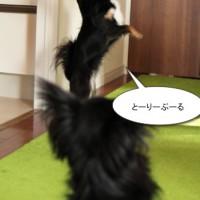 ichi_24501.jpg