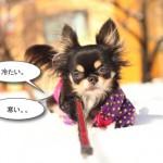 ichi_26291.jpg
