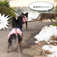 ichi_26494.jpg