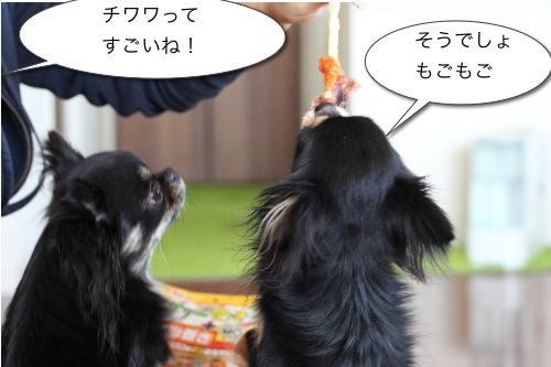 Ichi 26636
