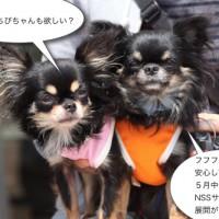 ichi_26868.jpg