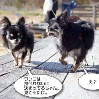 IMG_31252.jpg
